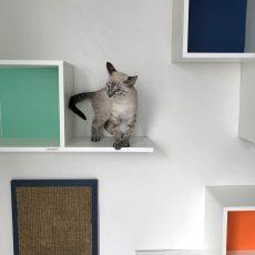 Hotel gatos 9 (1)